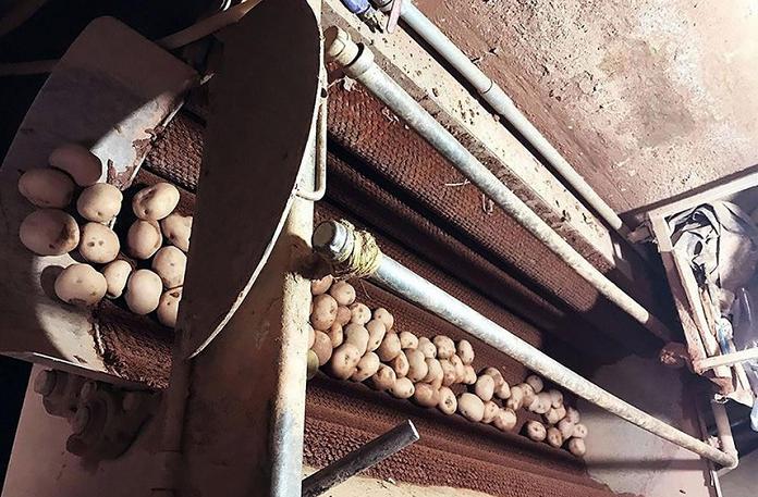 Khoai tây Trung Quốc lại đổ về xứ rau Đà Lạt